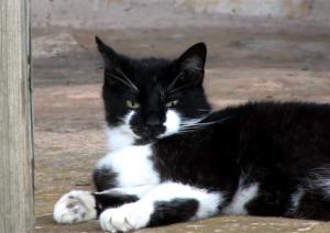 Palo Alto Creek Farm cat