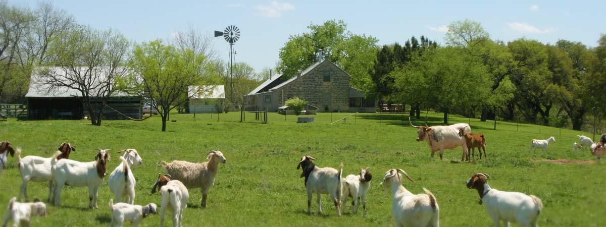 Palo Alto Creek Farm Goats